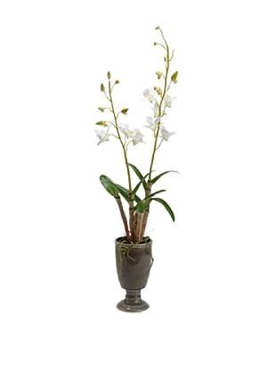 Amadeus Orquídea Dendobrium Maceta Cerámica Alto 81 Blanco