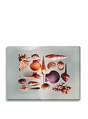 Photos.Com By Getty Images Sea Shells By Tom Kelley On Canvas