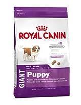 Giant Puppy- - 1 KG