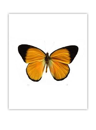 Art Addiction Acrylic Printed Mustard Butterfly
