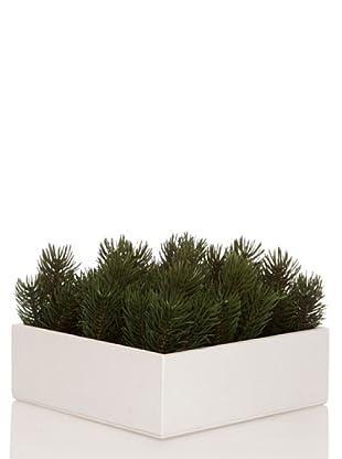 Concoral Concobox Pino Picea