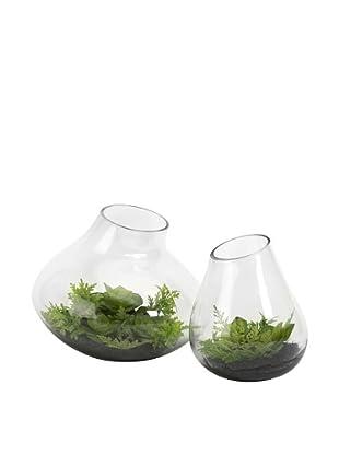 Set of 2 Gaudet Succulents