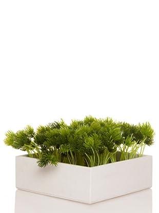 Concoral Concobox Pino Mini Verde Brote Verde