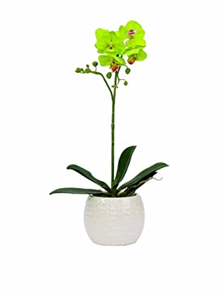Lux-Art Silks Small Orchid In White Container, Green (Green)