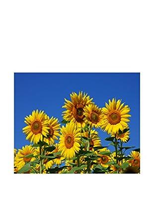 LegendArte  Wandbild Sonnenblumen
