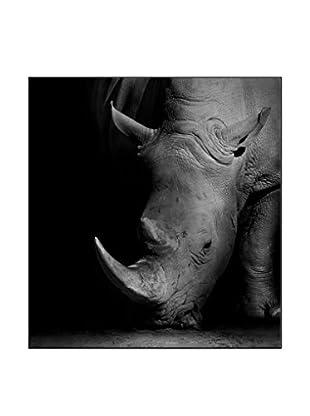 Rhino Photography On Mounted Metal