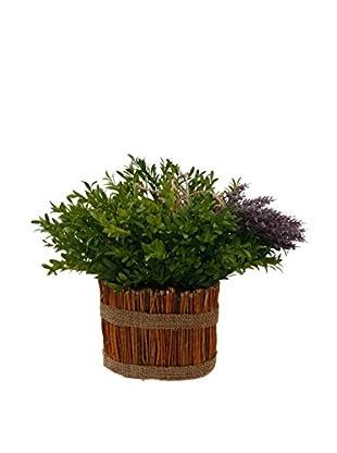 Winward Lavender Boxwood in Stick Planter, Blue/Green