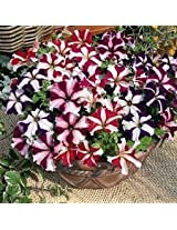 Petunia Ultra star Flower seeds