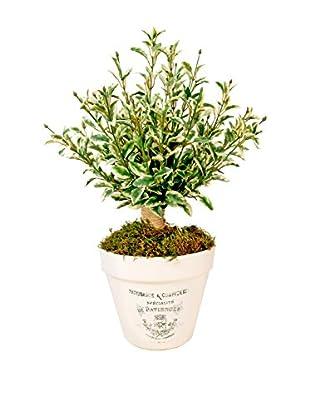 Creative Displays Inc. Oregano Clay Pot Planter, Green/White