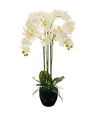 Evergreens Planta Artificial Phalaenopsis Blanco