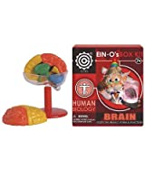 EIN-O's Human Brain Box Kit