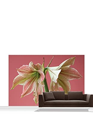 Clive Nichols Photography Exotic Star Mural, Standard, 12' x 8'