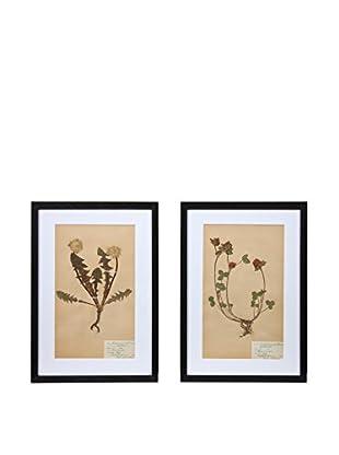 Pair of Framed Herbarium II Artwork, Natural