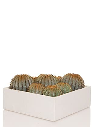 Concoral Concobox Cactus Redondo