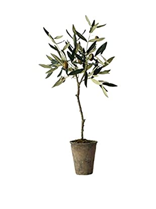 Sage & Co. Olive Tree in Pot