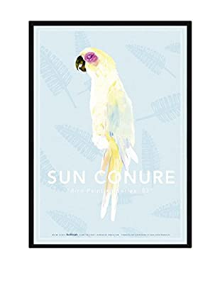 Really Nice Things Bild Sun Conure