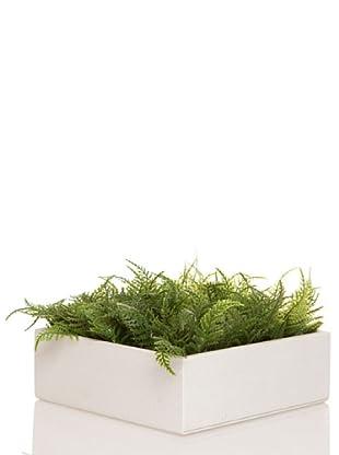 Concoral Concobox Helecho Verde Verde
