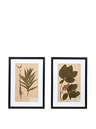 Pair of Framed Herbarium XXII Artwork, Natural/White/Black