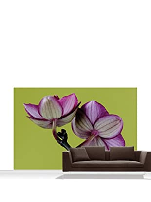 Clive Nichols Photography A Doritaenopsis Orchid III Mural, Standard, 12' x 8'