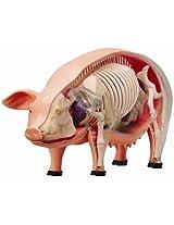 4D Vision Pig Anatomy Model