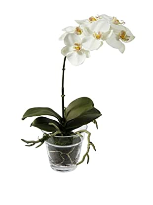 Winward Faux Phalaenopsis Plant in Glass Pot, White