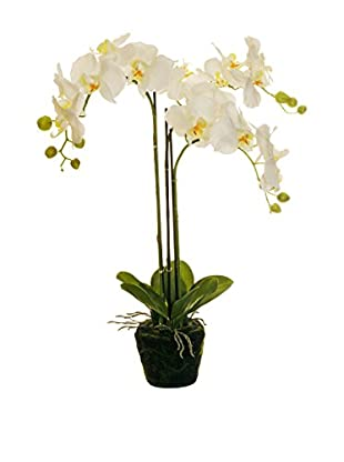Evergreens Planta Artificial Phalaenopsis Blanco