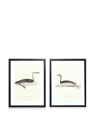 Wright Brothers Bird Prints, C. 1920, Pair