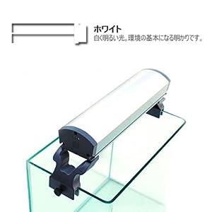 【クリックで詳細表示】アクアシステム アクシーキュート300 ホワイト: ペット用品