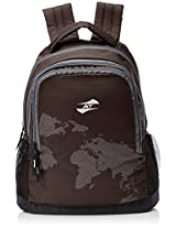 American Tourister Brown Casual Backpack