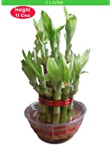 Online Birthday Gift Ideas - Bamboo Plant 2 Layer at Just Rs.199