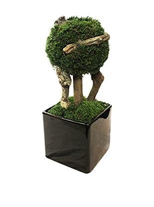 Forever Green Art Single Ball Moss Bonsai