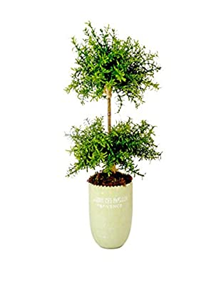 Creative Displays Inc. Small Leaf Feather Plant Topiary, Green