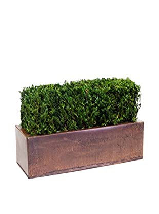 Forever Green Art Table Top Hedge