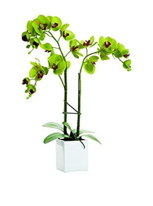 Torre & Tagus Olive Green Faux Potted Orchid