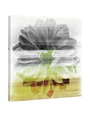 Parvez Taj Leinwandbild Bloom