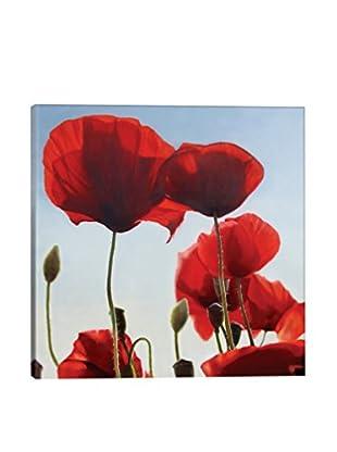 Thomas Darnell Poppies Canvas Print