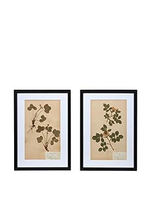 Pair of Framed Herbarium IV Artwork, Natural/White/Black