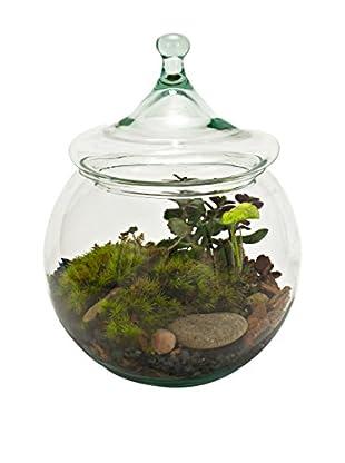 bambeco Recycled Glass Garden Terrarium