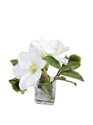 New Growth Designs White Amaryllis Arrangement
