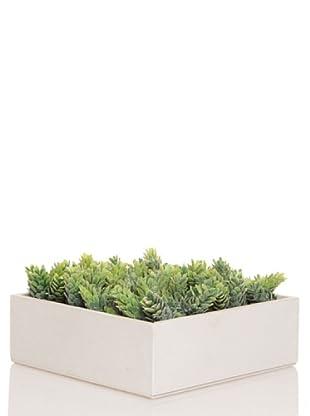 Concoral Concobox Cactus Piña Flocada Gris