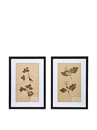 Pair of Framed Herbarium V Artwork, Natural/White/Black