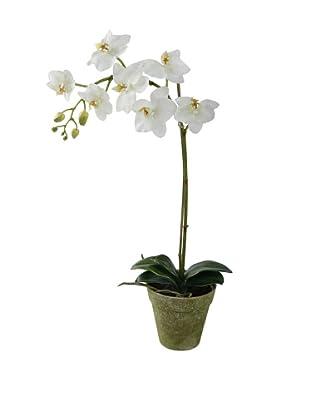 Winward Faux Phalaenopsis Orchid in Terracotta Pot, White