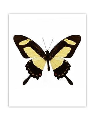 Art Addiction Acrylic Printed Yellow Butterfly II