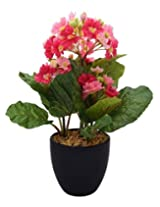 Fourwalls Premium Range Primula Flowers in a Ceramic Vase (32 cm, Light Pink)