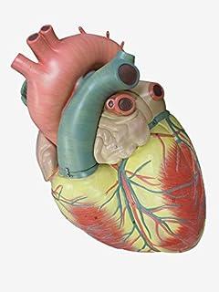 50~60代の日常生活に潜む「心臓の赤信号」