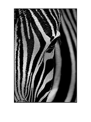 Face Of The Zebra Photography On Mounted Metal