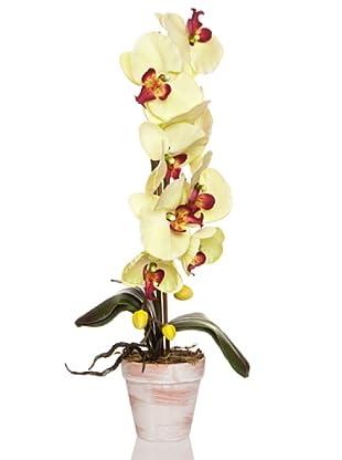Concoral Maceta Orquídea Verde