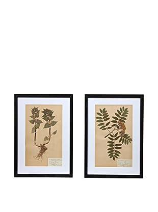 Pair of Framed Herbarium VI Artwork, Natural/White/Black