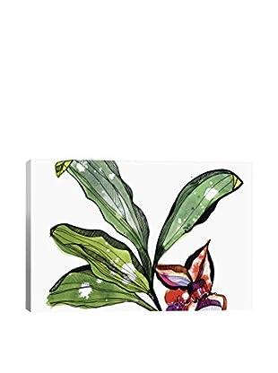Cayena Blanca Bee Orchid Canvas Print
