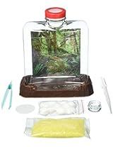 TEDCO Ant City Kit